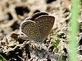 Grass jewel from Savandurga IMG 9602.jpg