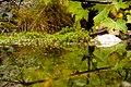 Green (1538980159).jpg