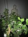Green Chameleon.jpg