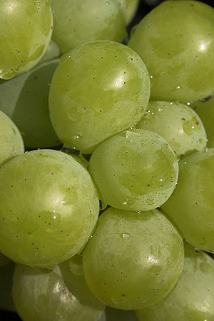A green wine grape detail.