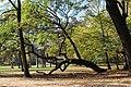 Großer Garten Dresden II (DeinVater012).jpg
