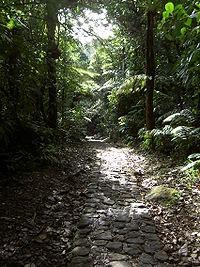 Guadeloupe 123 - Massif de la Soufrière 1467m - Chemin des bains jaunes.jpg