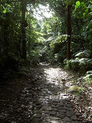 Guadeloupe National Park - Image: Guadeloupe 123 Massif de la Soufrière 1467m Chemin des bains jaunes