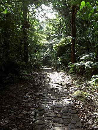 La Grande Soufrière - Image: Guadeloupe 123 Massif de la Soufrière 1467m Chemin des bains jaunes