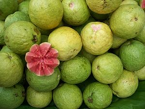 Guava, photographed in Bangalore