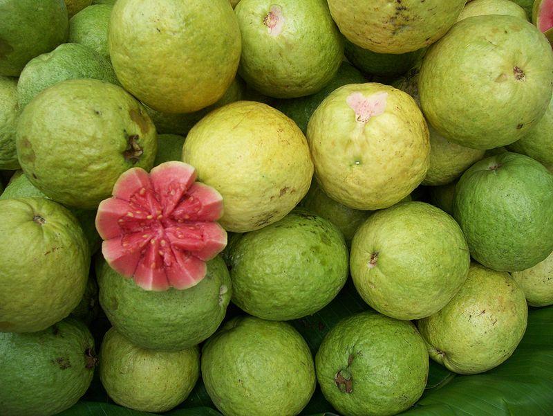 gujawa - źródło witaminy C