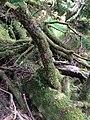 Gwaii Haanas National Park (27554311575).jpg