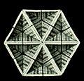 Haeckel Amphoridea-5b.jpg