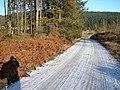 Hafren Forestry Road - geograph.org.uk - 1113844.jpg