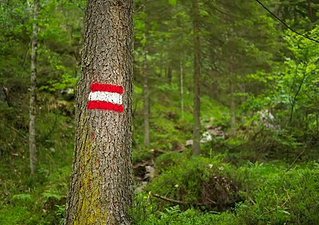 Typical Austrian hiking trail mark on a tree in Nationalpark Gesäuse