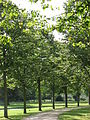 Hampton Court Palace (3037810476).jpg