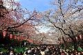 Hanami in Ueno Park.jpg
