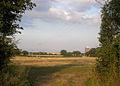 Hawkhurst Moor - geograph.org.uk - 213968.jpg