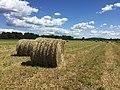 Hay Bales in Field.jpg