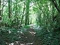 Hazelmere Hole - geograph.org.uk - 1411128.jpg