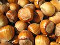 Hazelnuts 02.jpg