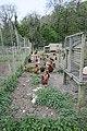 Hens (35799648310).jpg