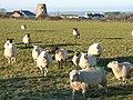 Hermon Windmill - geograph.org.uk - 101336.jpg
