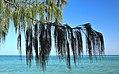 Heron Island 07.jpg