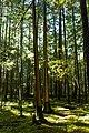 Hidden Grove Park 2 (15387749635).jpg