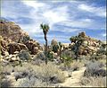 Hidden Valley, Joshua Tree NP 4-13-13l (8689099921).jpg
