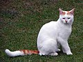 Hitchin cat (29204783716).jpg