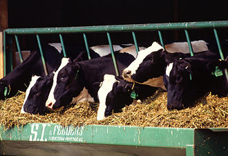Bovine somatotropin - rBST is a product allowed only in certain jurisdictions and primarily given to dairy cattle by injection to increase milk production.
