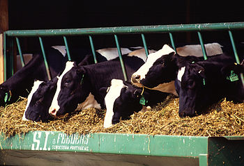 Holstein dairy cows from http://www.ars.usda.g...