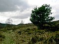 Holystone Common - geograph.org.uk - 809708.jpg