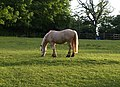 Horse near The Round House - geograph.org.uk - 826500.jpg