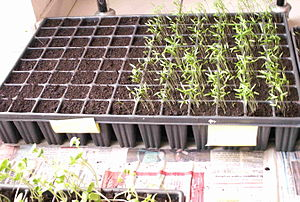 Germination - A seed tray used in horticulture for sowing and taking plant cuttings and growing plugs