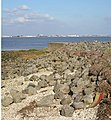 Humber Foreshore with Riprap - geograph.org.uk - 589399.jpg