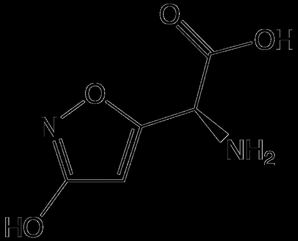 Ibotenic acid2