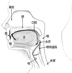 Illu01 head neck zh.jpg