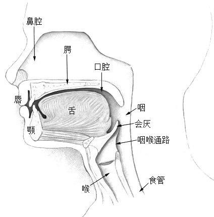 Illu01 head neck zh
