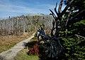 Im Nationalpark Bayerischer Wald, Lusen 1373 m ü.NN. 02.jpg