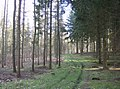 In Highclere Wood - geograph.org.uk - 360260.jpg