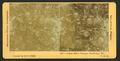 Indian River oranges, Rockledge, Fla., U.S.A, by Singley, B. L. (Benjamin Lloyd).png