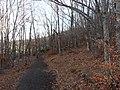 Invierno 2011 en Tejera negra - panoramio (13).jpg