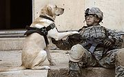 A U.S. Army Staff Sgt. and his military working dog wait at a safe house before conducting an assault against insurgents in Buhriz, Iraq on April 10, 2007.