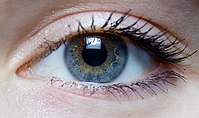 Iris - right eye of a girl.jpg