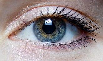 Iris - right eye of a girl.jpg