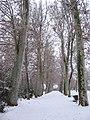 Jardín de la Isla nevado - panoramio.jpg