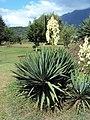 Jawaharlal Nehru Memorial Botanical Gardens, Srinagar 18.JPG