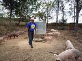 Joel Salatin and pastured pigs.jpg