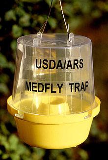 Insect trap - Wikipedia