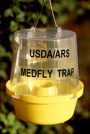 1989 California medfly attack - A newer model of medfly trap that uses three chemical attractants, rather than one.