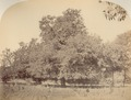 KITLV 100099 - Unknown - Tamarind Tree in Sussa's Bag (Saras Baug), the park at the Parvati Lake at Poona in India - Around 1875.tif