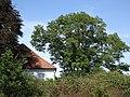 Kalkar ND 03 Till-Moyland Esche am Pastorat PM19-01.jpg