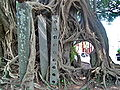 Kam Tin Tree House - 2007-09-30 14h00m12s SN200792.jpg